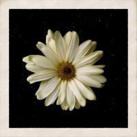 Cody Simpson - Flower.mp3